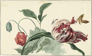 Tulp en een papaver, Willem van Leen van