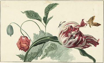 Tulpe und eine Mohnblume - Willem van Leen von