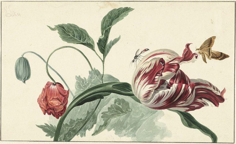 Tulp en een papaver, Willem van Leen van Hollandse Meesters