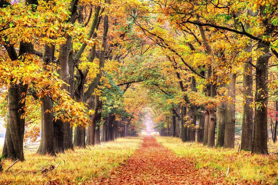Herfstkleuren op de Veluwe van Dennis van de Water