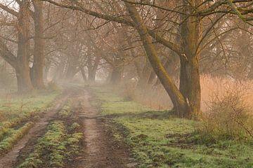 Bospad in de mist bij zonsopkomst van Michel Vedder Photography