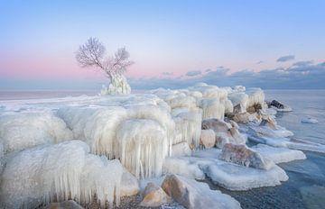 Ice Wonderland, Larry Deng van 1x