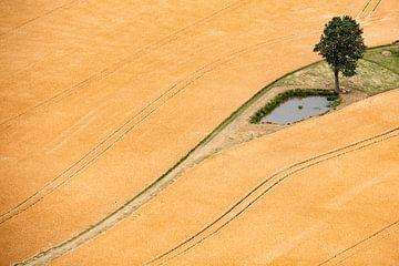 Getreidefeld van Andreas Müller