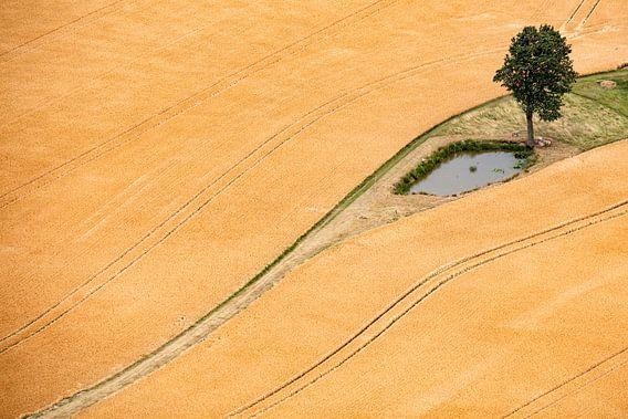 Getreidefeld von Andreas Müller