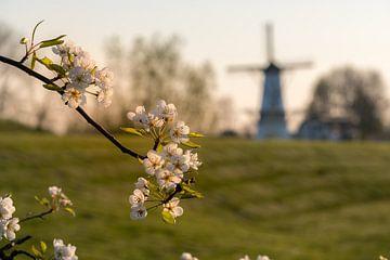 Bloesemmolen de Vlinder in de Betuwe van Moetwil en van Dijk - Fotografie