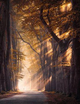 Gouden bomen in de mist van Rob Visser