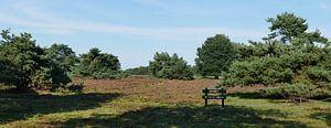 Nuilerveld der Landschaft von Drenthe
