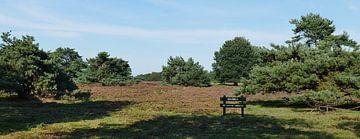 Nuilerveld der Landschaft von Drenthe von Wim vd Neut