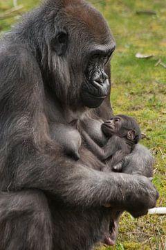 Moeder gorilla met kind van Renate Peppenster