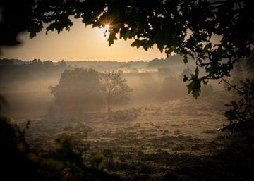 Nebliger Morgen auf der Heide von Saskia Pasman