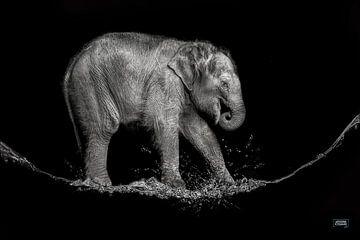 water olifantje van