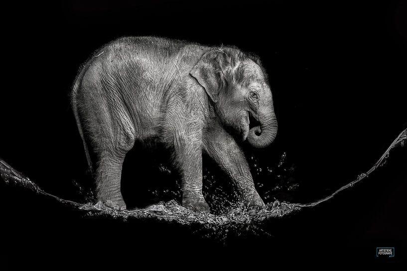 water olifantje van Jiske Wijmans @Artistieke Fotografie
