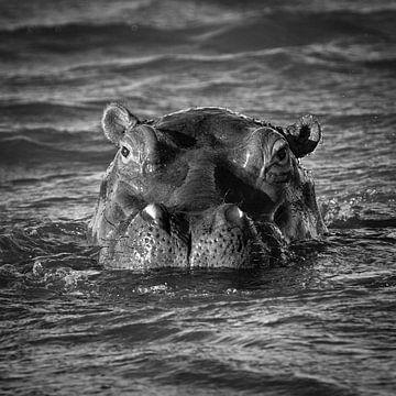 Nijlpaard van Frans Lemmens