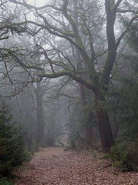 Nebel in Drenthe von Marco Bos