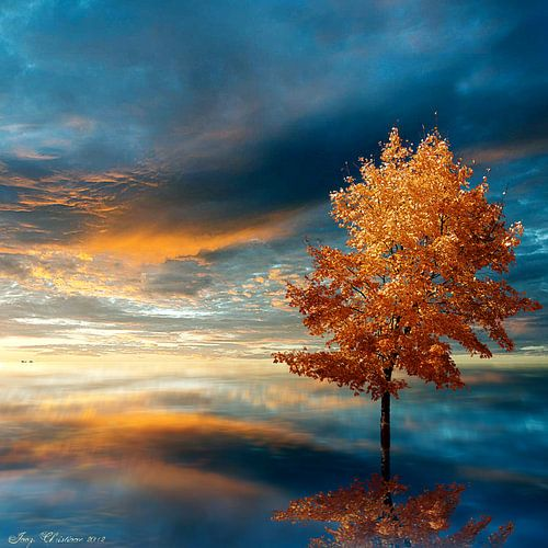 Blue Autumn van