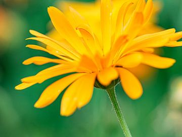 Gele bloem van Li Wa