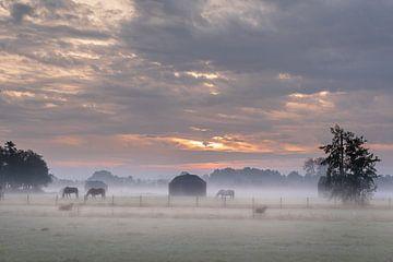 Sonnenaufgang im Nebel mit Pferden von Saskia van Gelderen