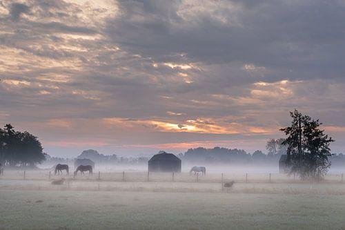Zonsopkomst in de mist met paarden