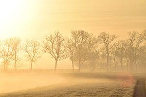 Morgennebel von Johanna Varner