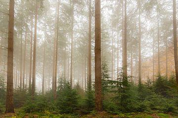 Vue dans un paysage de pins brumeux sur Sjoerd van der Wal