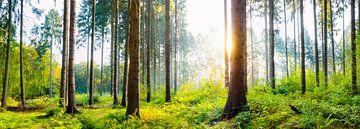 Bos in de zomer bij zonsopgang van Günter Albers