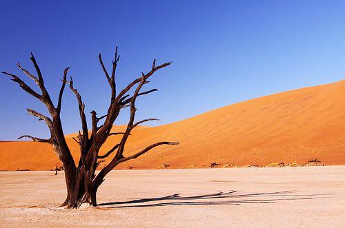 Schattenwurf - Dead Vlei Namibia