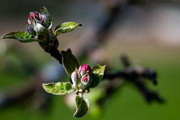 Blüzenzauber sur Guenter Purin