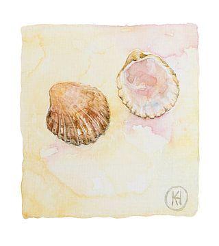 Muscheln am Strand von Studio Heyki