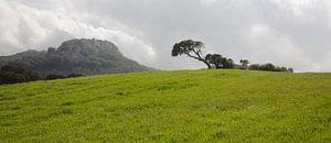 Eenzame boom van