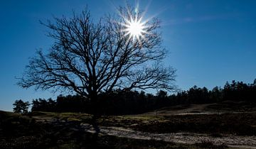 Boom in Nationaal Park De Loonse en Drunense Duinen von Sense Photography