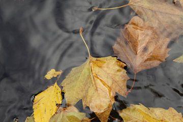 Herfstbladeren in water van Vannessa !
