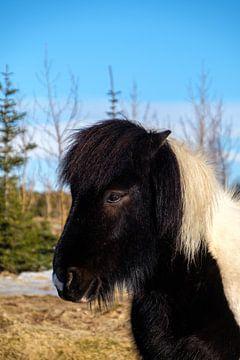 IJslands paardje van Joke Beers-Blom