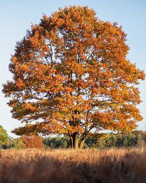 Boom in herfstkleur van Wouter Bos