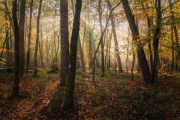 De kleuren van schoonheid von Joris Pannemans - Loris Photography
