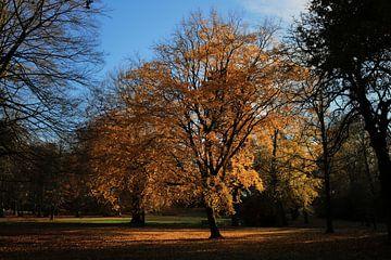 Boom uitgelicht door de heerlijke vroege lentezon van Joran Huisman