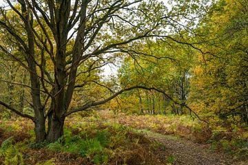 Landschaftswald mit Eichen im Herbst von Ger Beekes