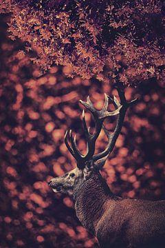 Het rode hert in het Rode woud 3 van Elianne van Turennout