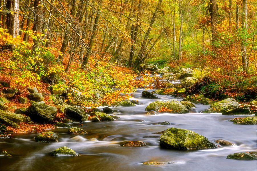 Herfst beek