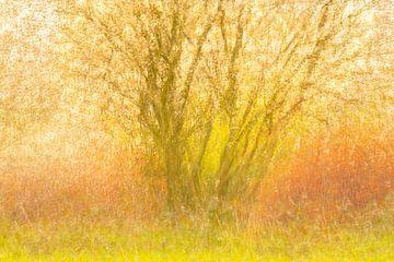 krentenboompje met een onderbegroeiing van gagel van Ria Bloemendaal