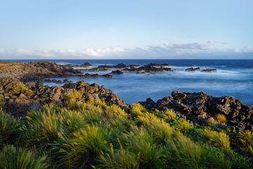 Rotsachtig strand met water en gras bij sterke wind van