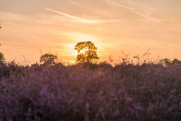 Hoorneboegse Heide - 3 van Nuance Beeld