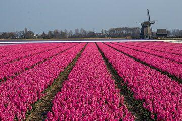 Roze vlakken van Peter Heins