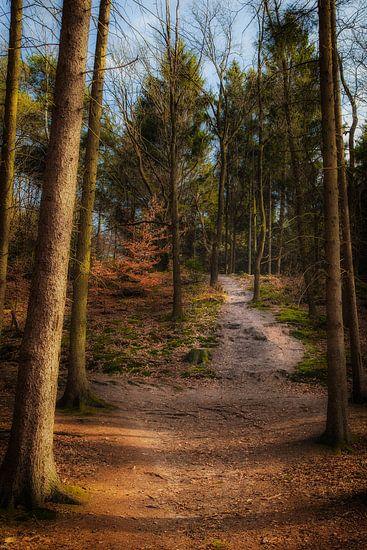 Een pad door het bos