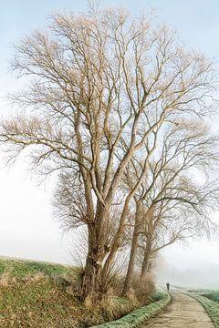 Rondom de boom van Michael Schulz-Dostal