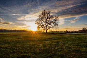 Sonnenuntergang bei Neschwitz von Holger Spieker