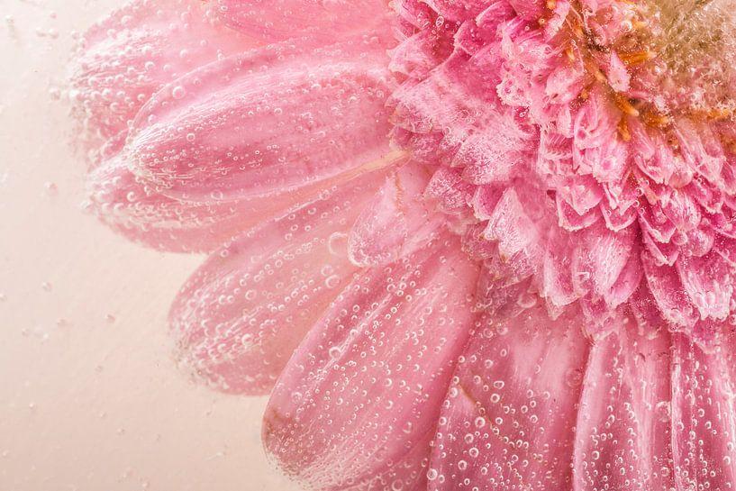 Roze gerbera van Willemien van Duinen