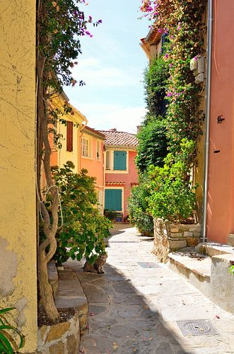 Late Summer in Bormes Les Mimosas, Provence