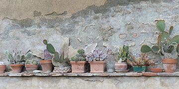 Reihe von Kakteen und Sukkulenten in Terrakotta-Töpfen von Annavee