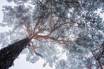 Winterbaumlinien, Ales Krivec von 1x