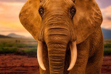 Porträt Elefant von Arjen Roos